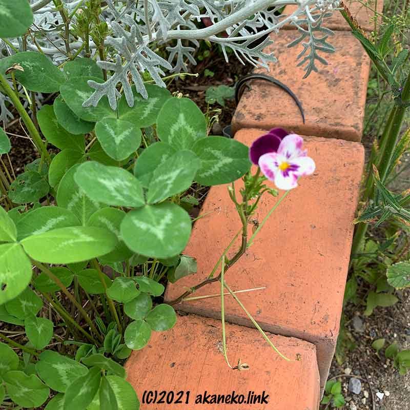 花壇の縁に消えるニホントカゲの尻尾