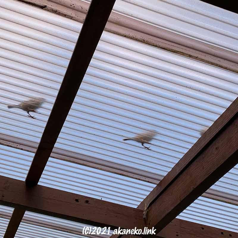 ウッドデッキの屋根下からみる雀の影