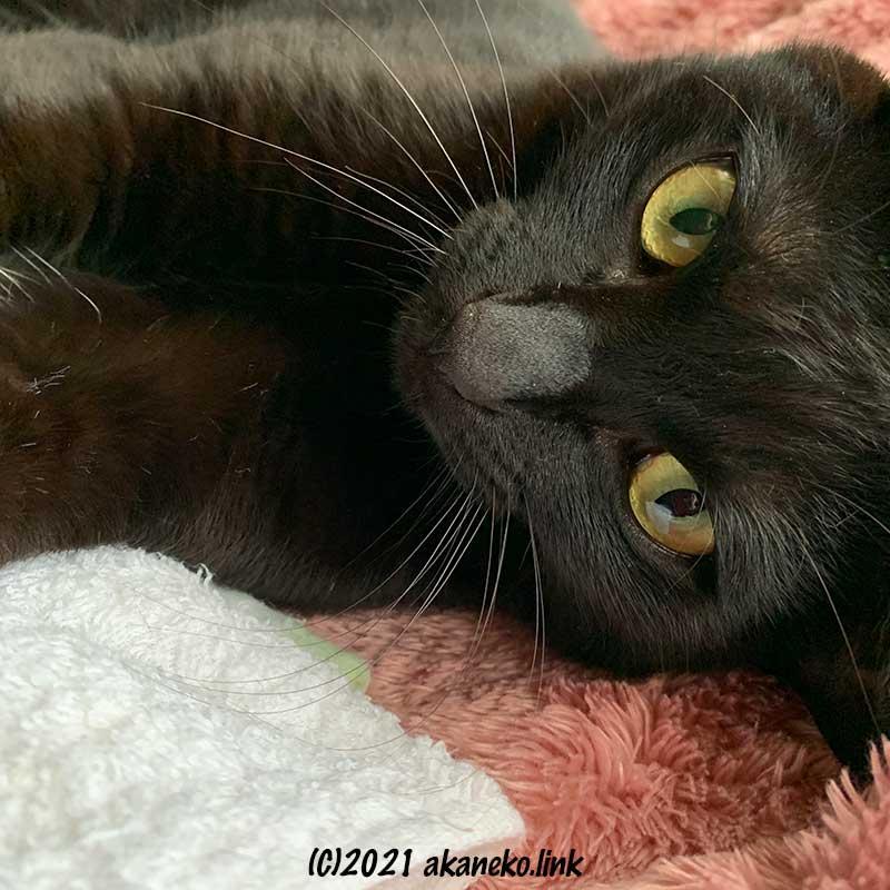 カメラ目線の黒猫