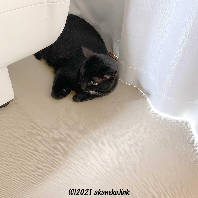 家具とカーテンの隙間で警戒する黒猫