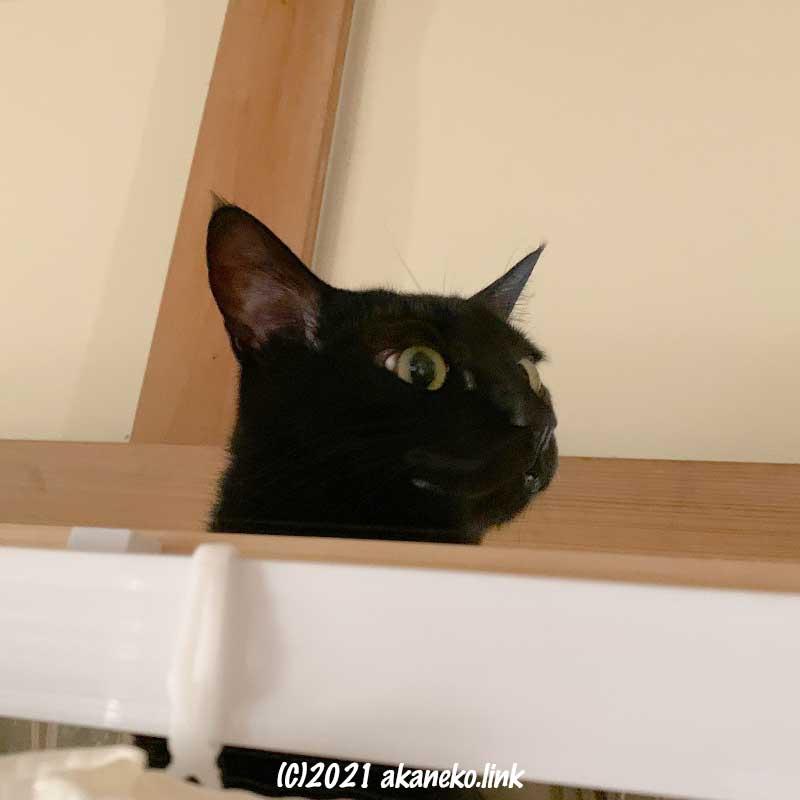 ちょっと怯え顔の黒猫