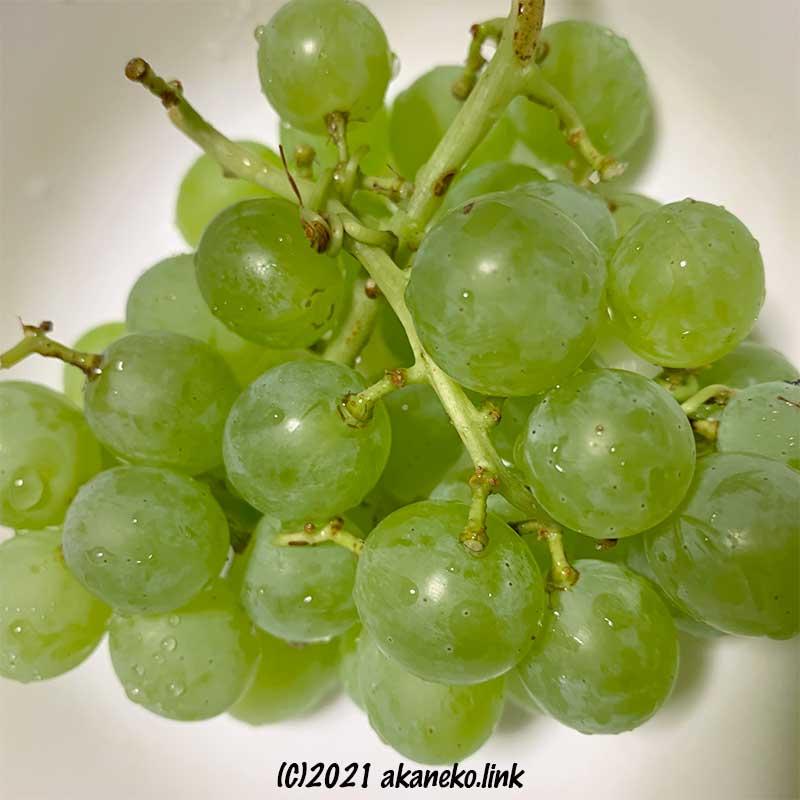 ジベレリンなしのヒムロッドの果実