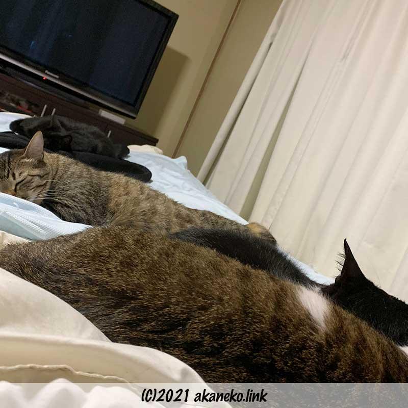ベッドを占領する4匹の猫