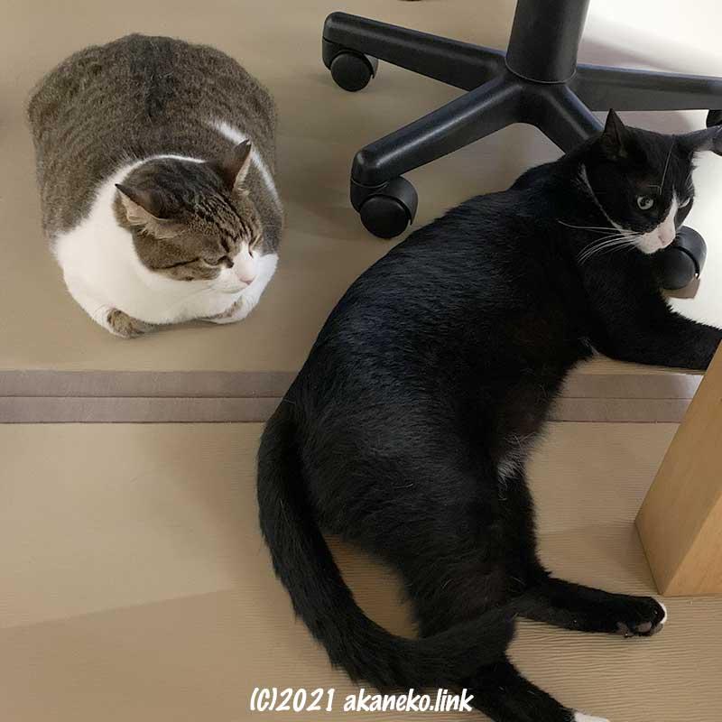 テーブルの下の2匹の猫