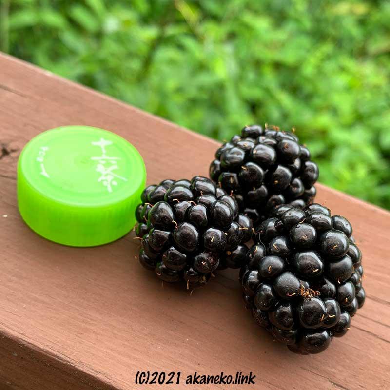 ブラックベリー(トリプルクラウン)の果実の大きさ