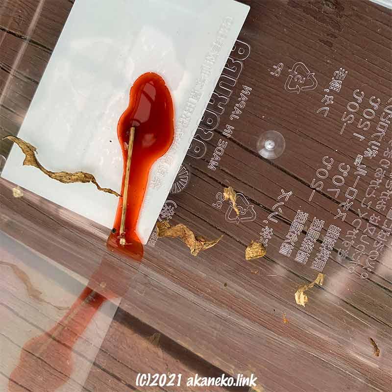ツマグロヒョウモンが羽化した後の濃いオレンジ色のオシッコ