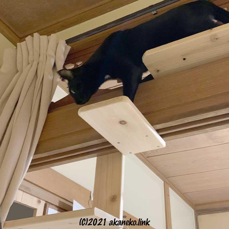 キャットウォークの具合を確認する猫