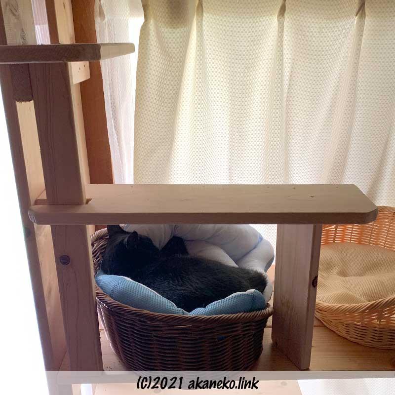 猫棚の上のカゴで寝ている黒猫