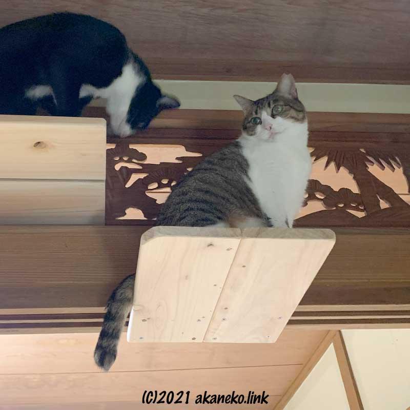 猫ステップに2匹の猫