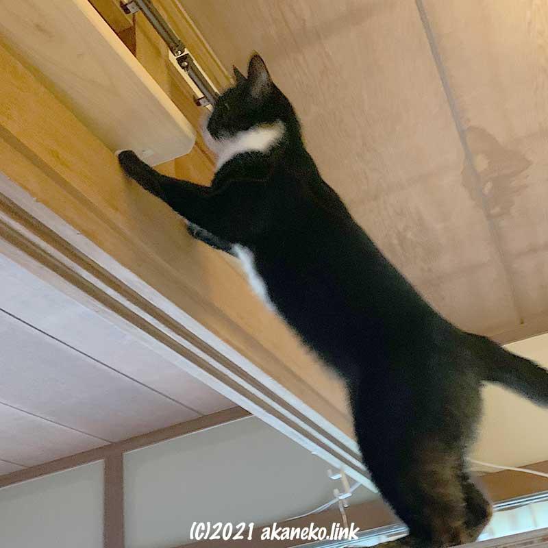キャットウォーク作りを邪魔する猫