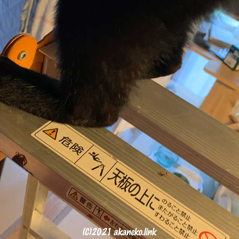 脚立の天板にのる猫の足