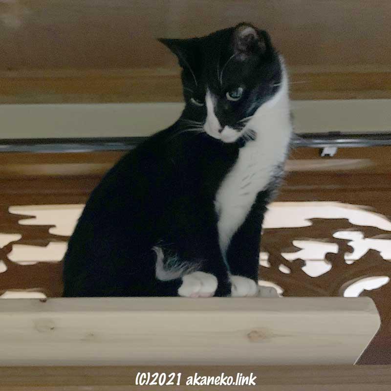 奥行きが足りないキャットウォークに乗る猫