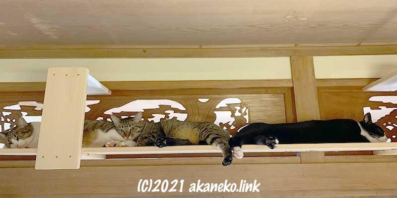 欄間前にしつらえた手作りキャットウォークに寝そべる3匹の猫