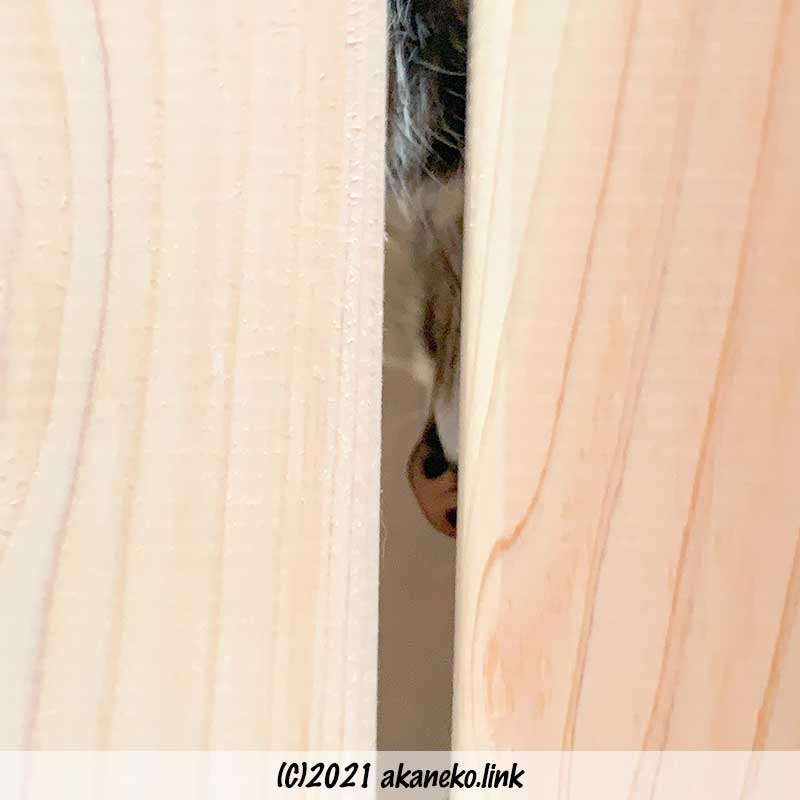 キャットウォーク板の隙間から見える猫の鼻