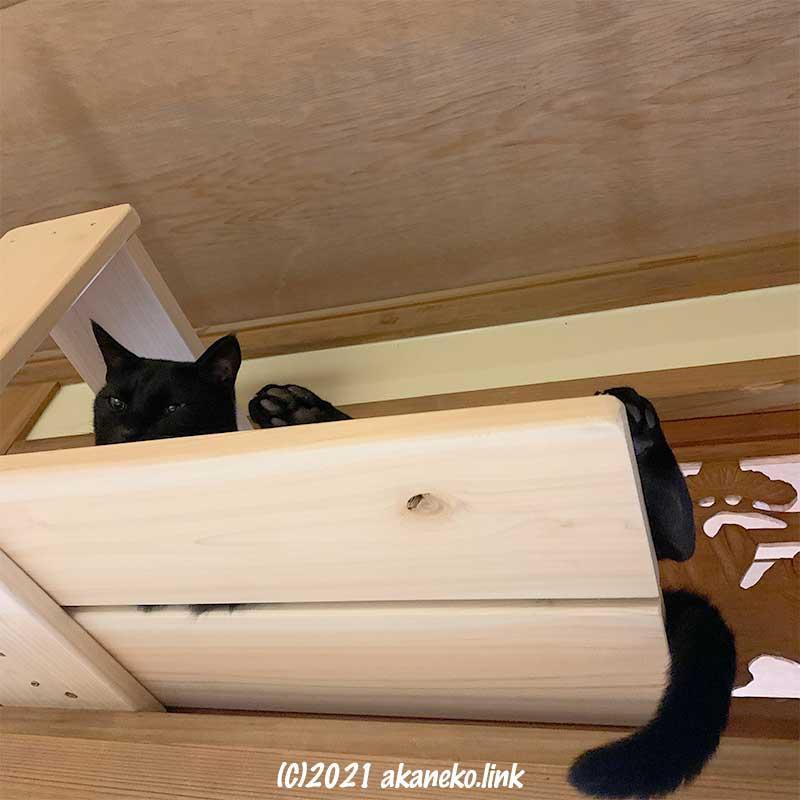 新しいキャットウォークに寝そべる黒猫