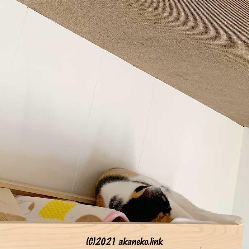 作りかけの猫棚で寝ている三毛猫