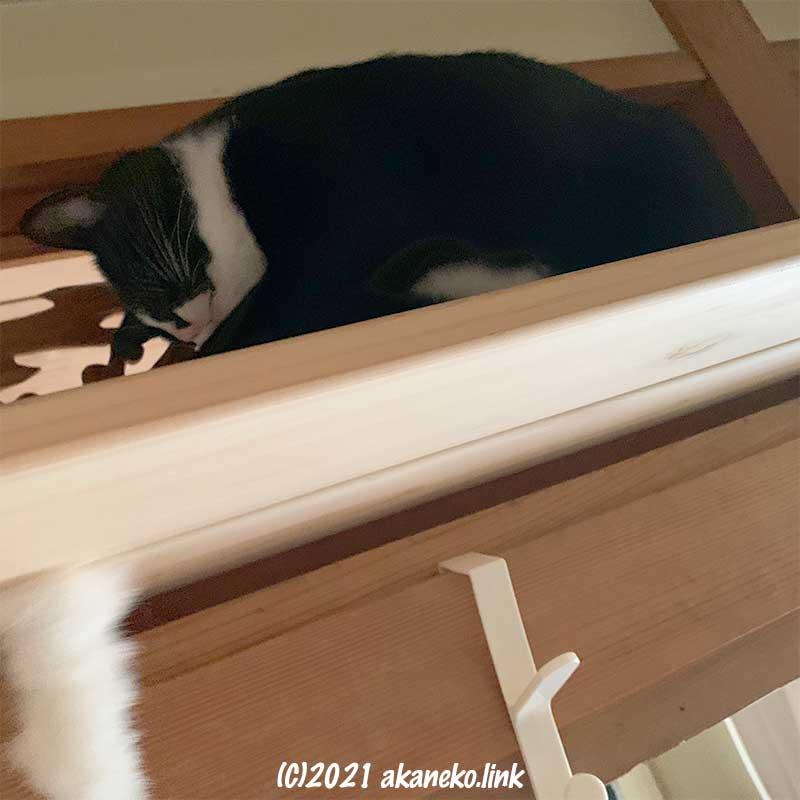 キャットウォーク板の隙間から猫じゃらし