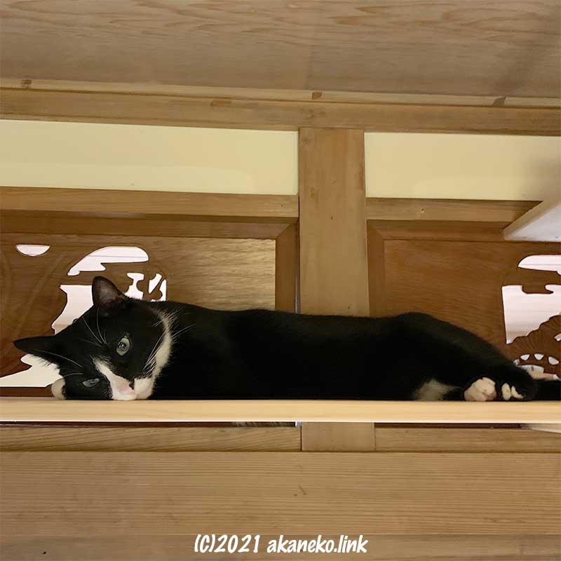 欄間の前のキャットウォークに寝そべる猫