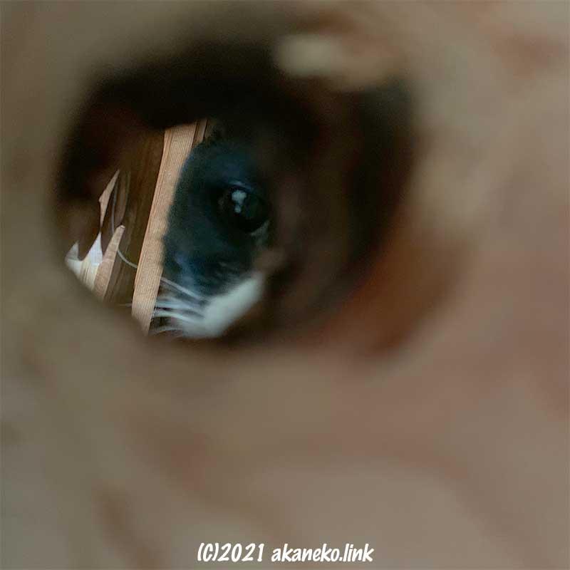 キャットウォークの節穴から覗く猫の顔