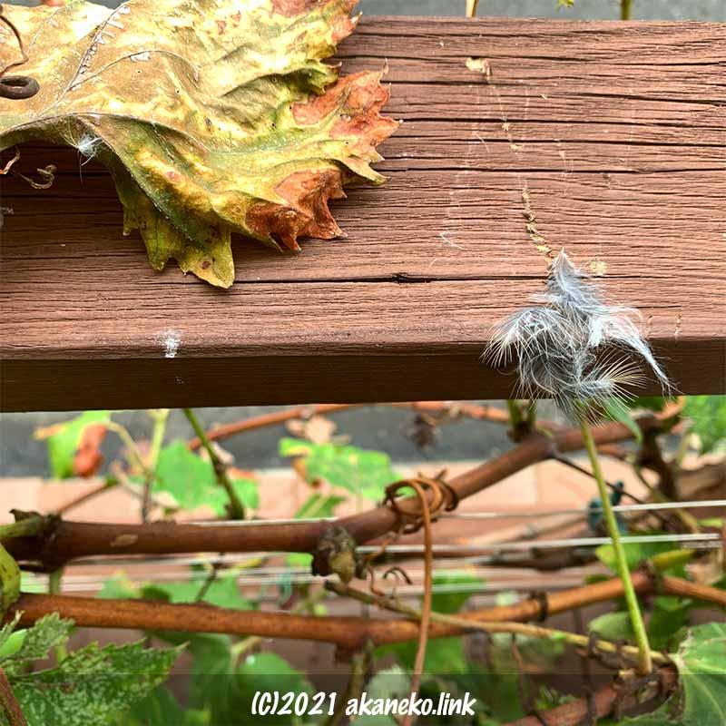 ウッドデッキの手すりの爪痕と鳥の羽