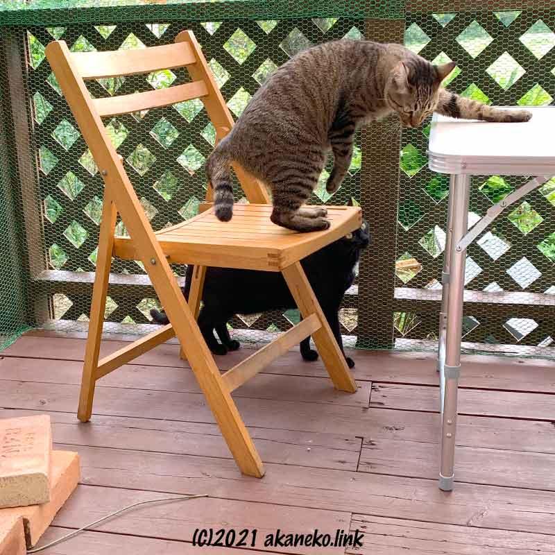 猫小屋の2匹の猫