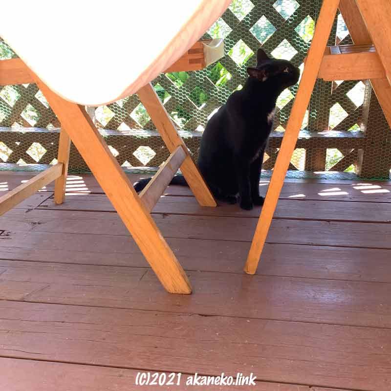 猫小屋の日陰にたたずむ黒猫