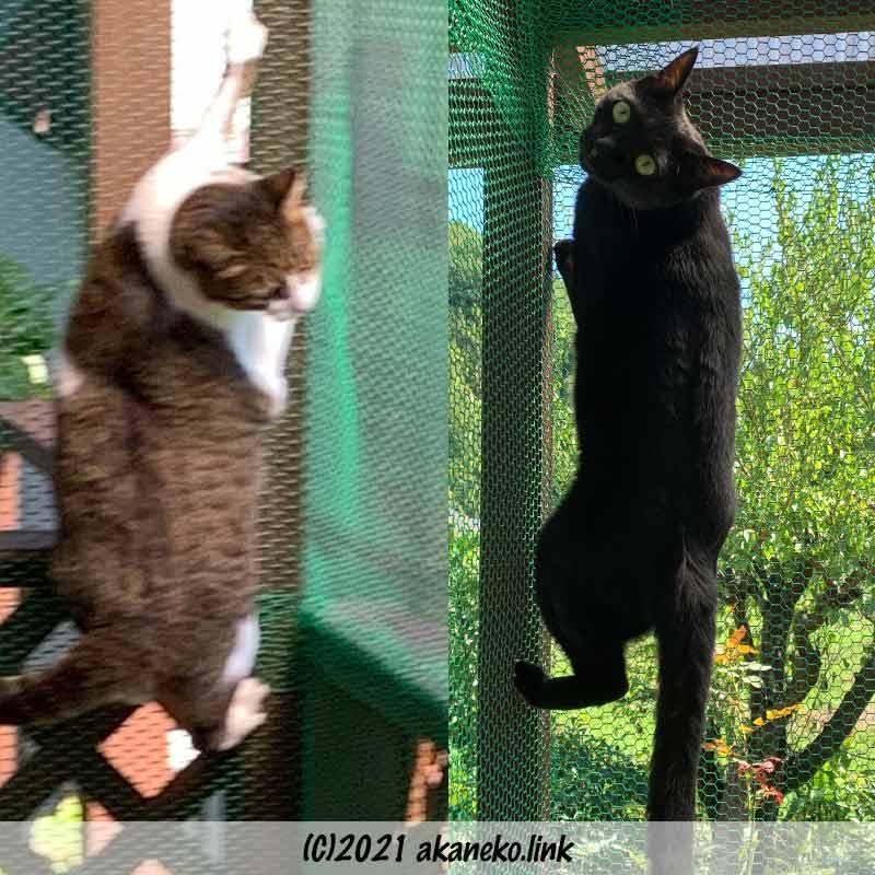 猫小屋の金網にしがみつく猫2匹