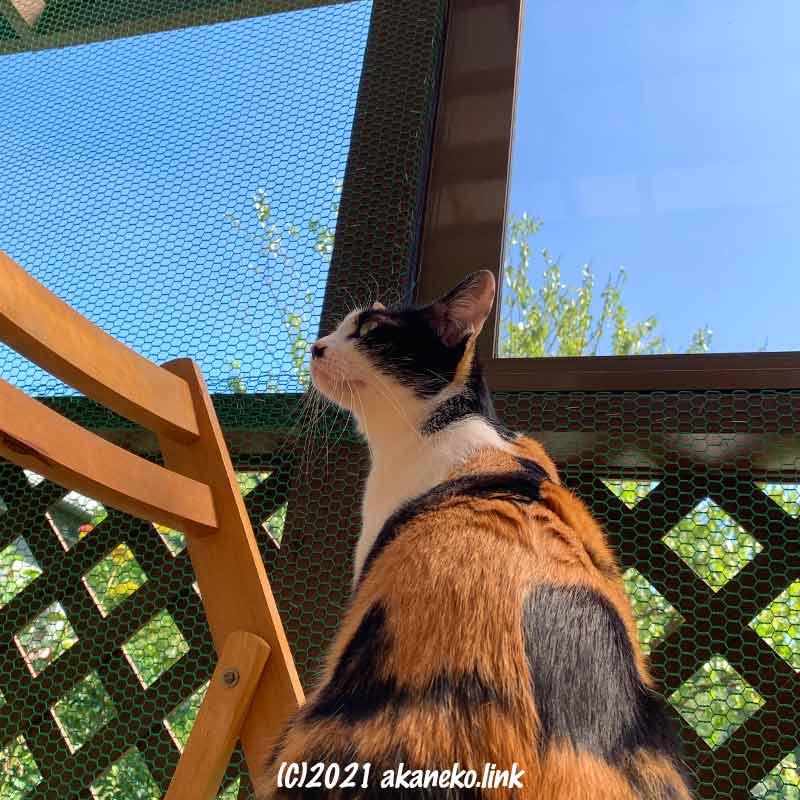 ウッドデッキを囲った猫部屋で新鮮な空気を嗅ぐ猫