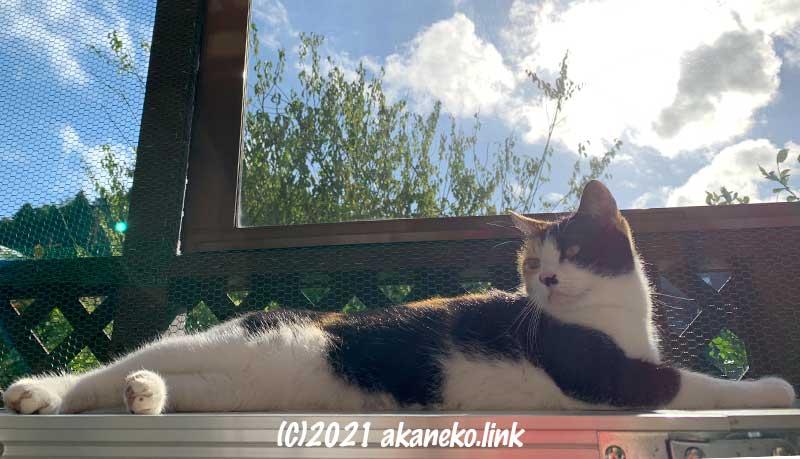 猫小屋で日向ぼっこ中の三毛猫