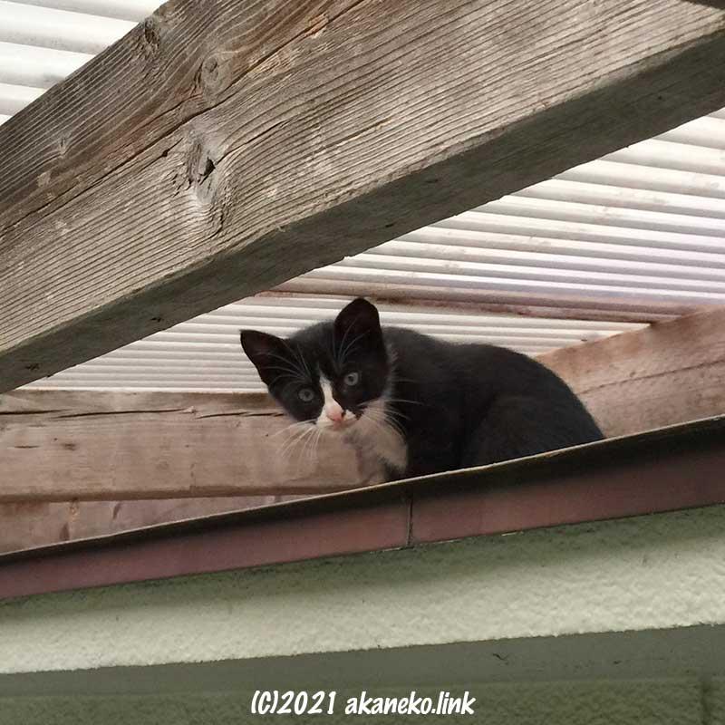 庇の上の子猫