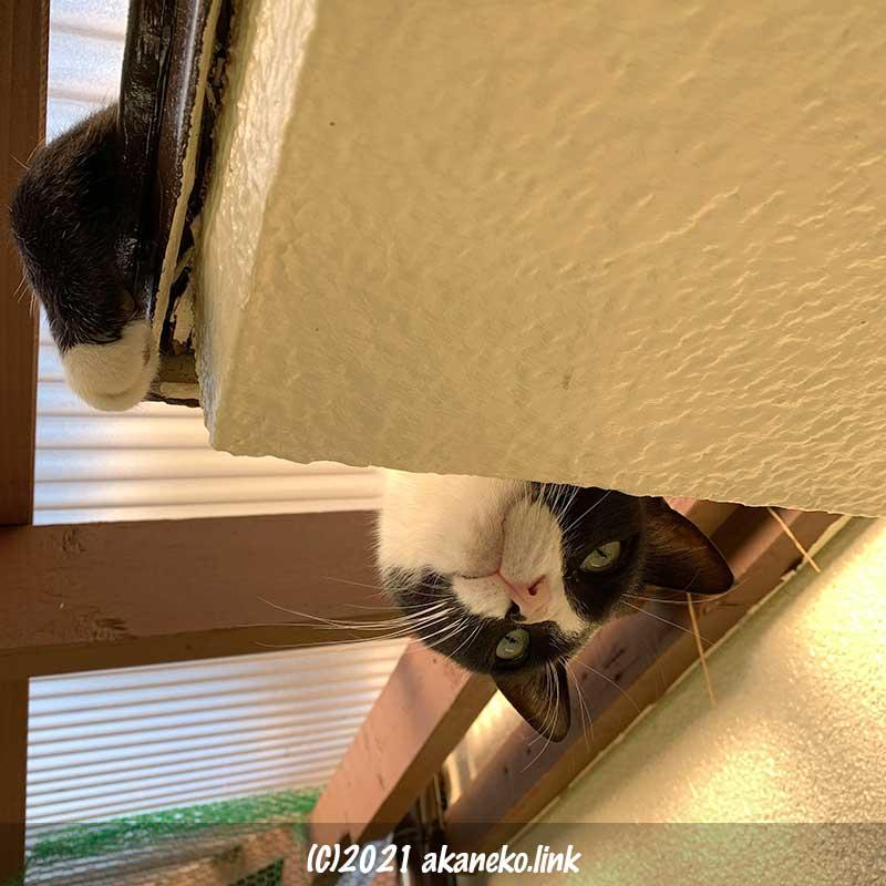 庇の上から下を覗く猫